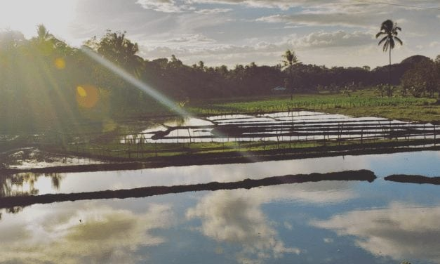 Exploring Cebu & Bohol: The Lands Of Fun And Sunshine