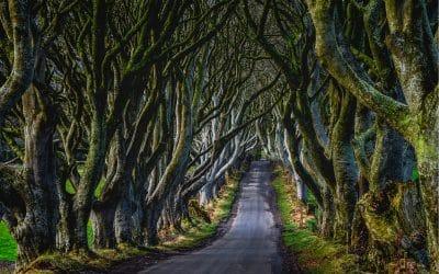 9 Lesser-known & Famous Modern Irish Poets