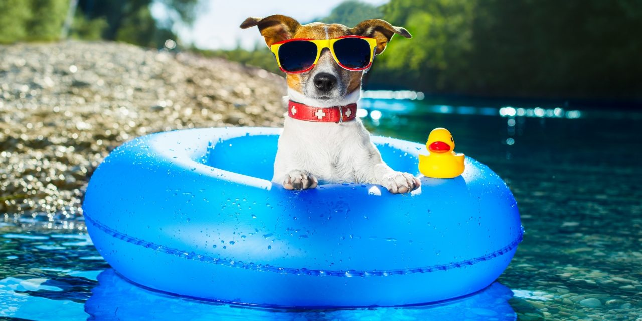 Useful & Fun Dog Travel Essentials For Summer