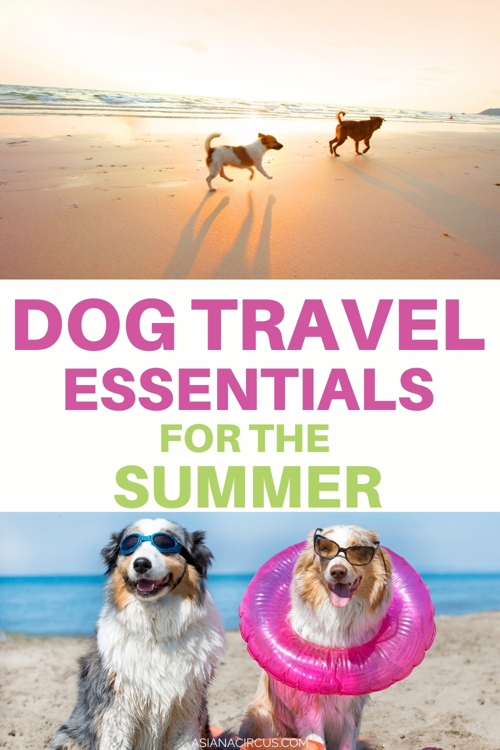 Dog Travel essentials for the summer (1)