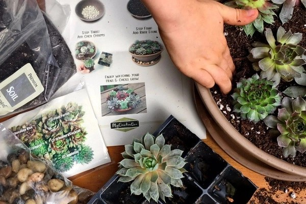 My Garden Box, Gardening subscription boxes for teens (Small)
