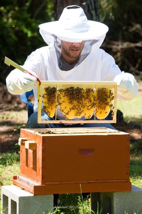 best creative hobbies that make money - beekeeping